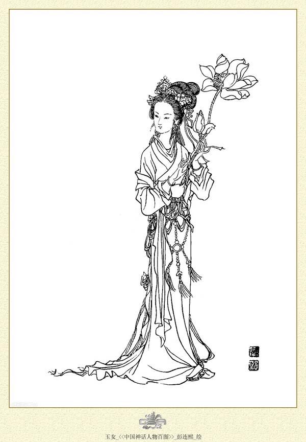 茶叶手绘插画线描