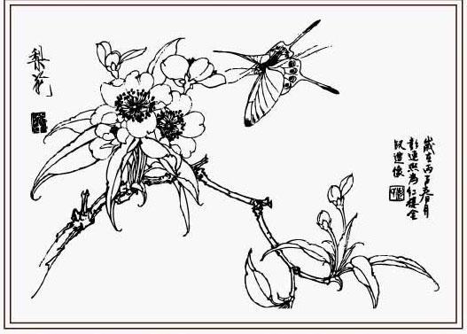 美术 图案 花草 花鸟图 白描 线描 黑白稿 手绘 工笔画 描图 绘画