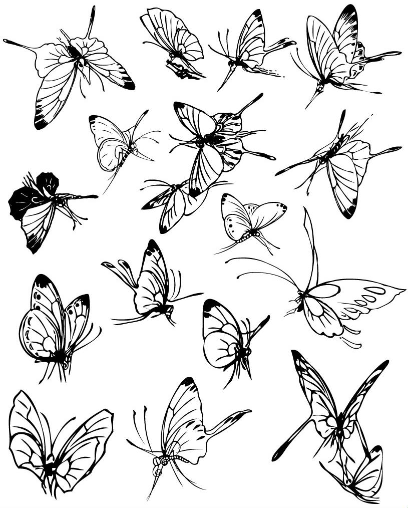 白描昆虫花卉cdr图片(矢量图-设计-素材