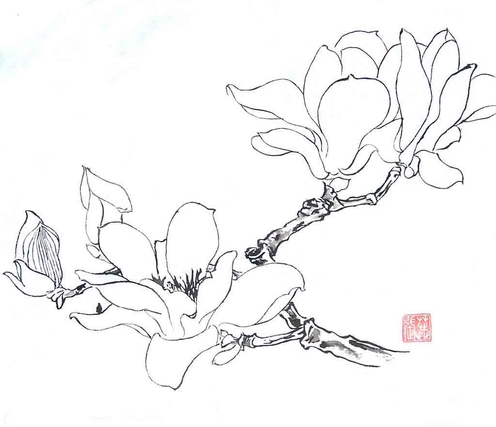 白描牡丹花鸟》》白描花卉》》工笔画蝴蝶白描图片
